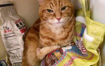 In the Matter of Cat vs. the Orange Impostor: Petition, Deposition, Repetition and Prayer for Relief