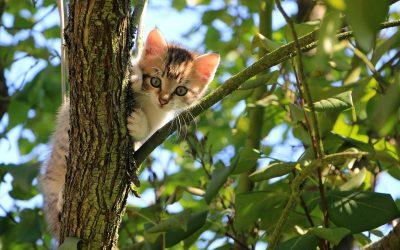 Kitten Trees