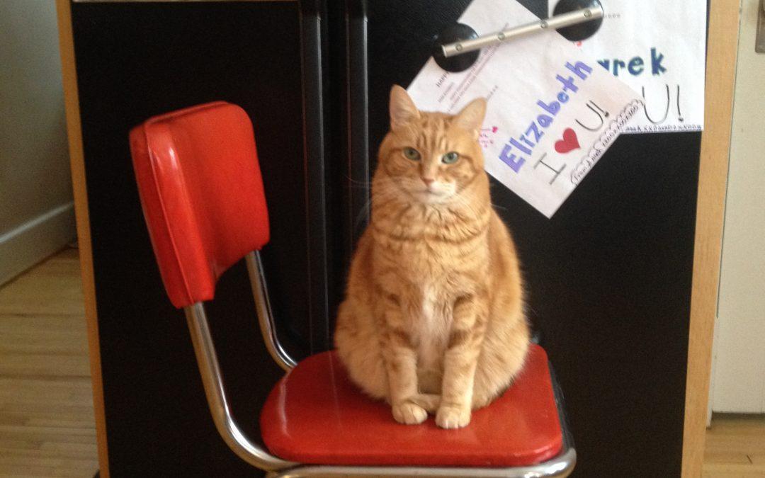 Cat Attorney Self-Discloses: The Lumpkin Diaries Begin!